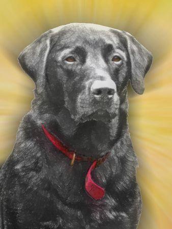 brown and black dog face: illustration of a black labrador dog Stock Photo