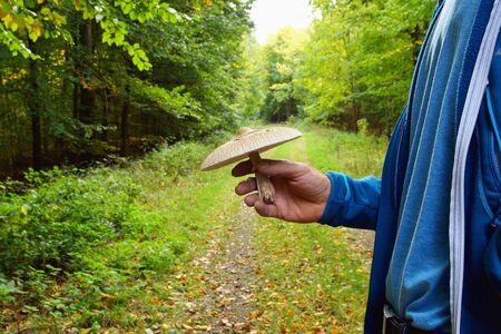 Mans hand holding a parasol mushroom, Macrolepiota procera. on Walkway With Green Trees in Forest. background of a pathway through the forest. Edible mushroom, tasty and healthy.