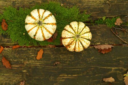 Pumpkin in fall on a table. Orange pumpkins on wooden planks, natural rotted boards covered with moss and dry leaves background. holiday decorations, flat lay