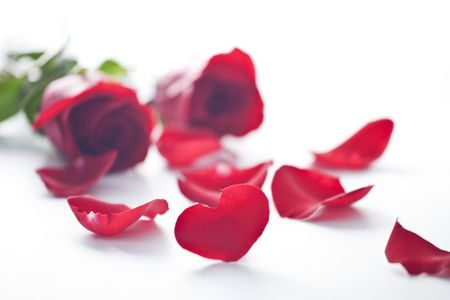 heart shape rose petal for valentine photo