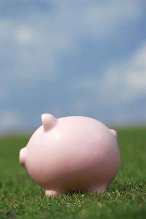 Piggy bank in field