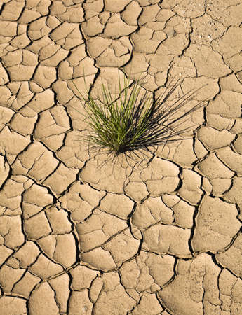 Plant growing in cracked,dry earth