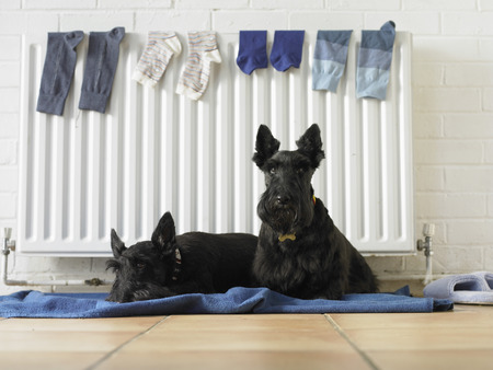 Dogs sitting on blanket by radiator
