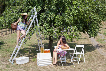 Women picnicking in orchard