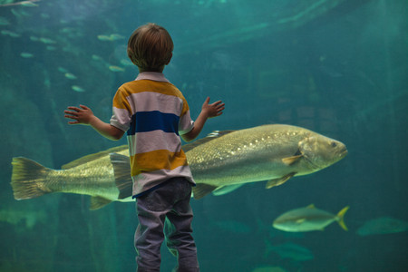 Boy admiring fish in aquarium Stock Photo