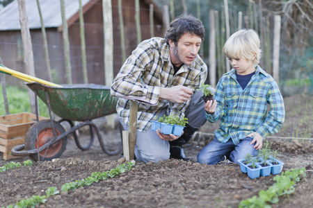 Father and son planting in rows