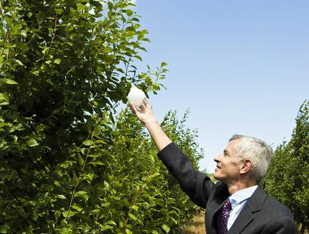 Man reaching up to branch holding light bulb. Фото со стока