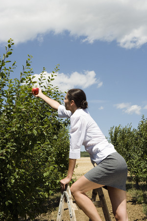 Woman on ladder reaching for apple in orchard.