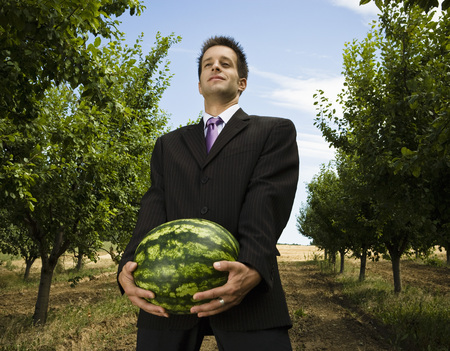 Man carrying melon in orchard low view. Фото со стока