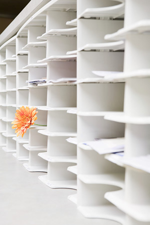Rows of office cubby holes with a flower sticking out of one Stock Photo
