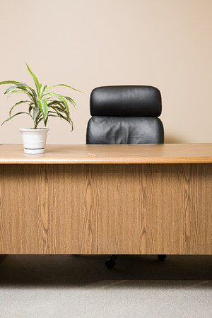 Office desk with pot plant