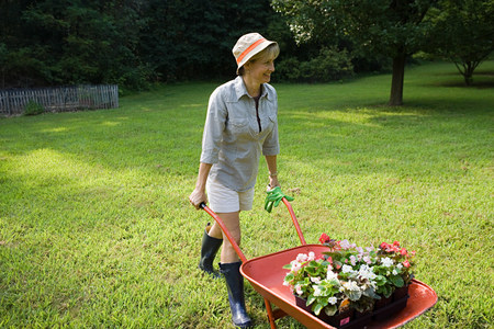 A woman with wheelbarrow of plants Stock Photo