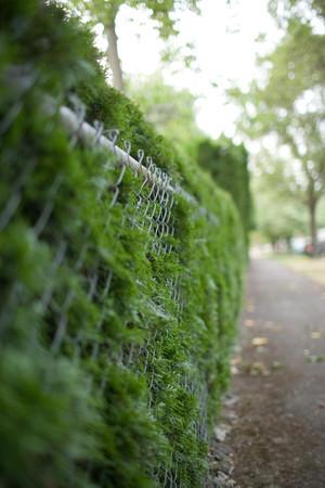 Wire fence and bushes Фото со стока