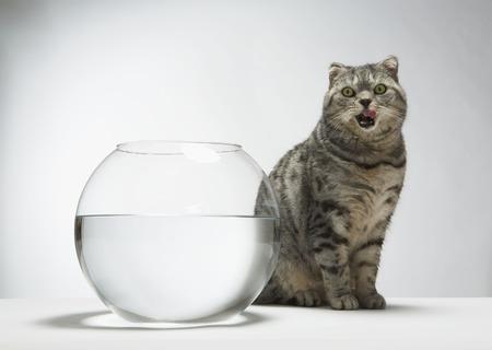Cat licking his lips Stock Photo