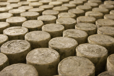 Many cylinders of cheese . Stock Photo