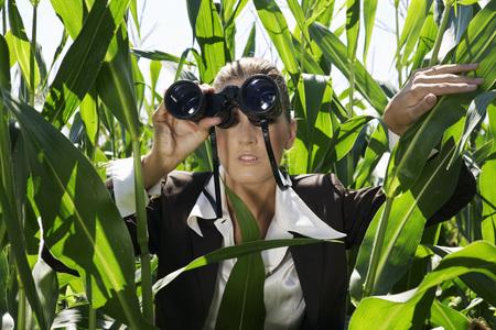 Businesswoman with binoculars in corn field. Фото со стока