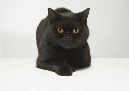 Portrait of black cat Stock Photo
