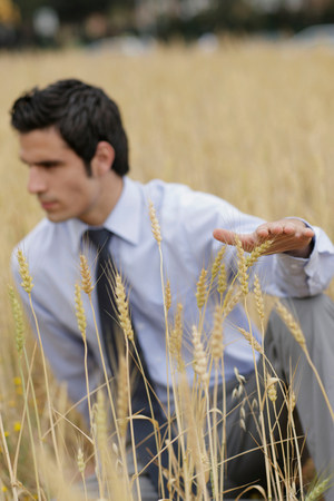 Business man in wheat field Imagens