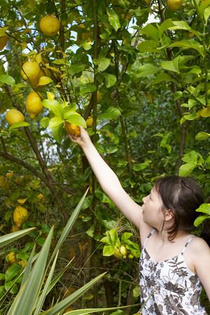 Young girl picking fruit
