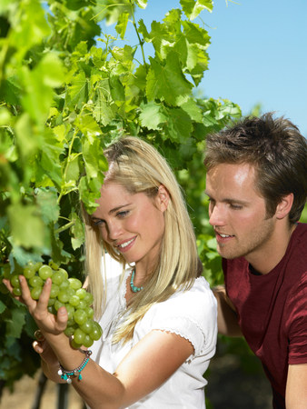 Woman looking at grapes on vine