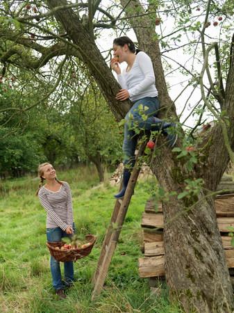 Girls picking apples at harvest time