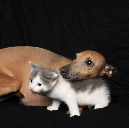 Kitten and dog on black background
