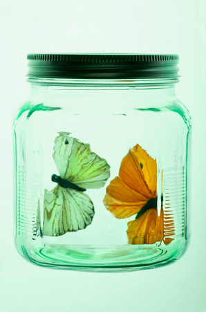 Two butterflies in glass jar