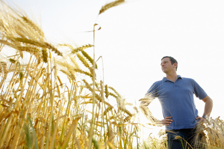 Man standing in a wheat field