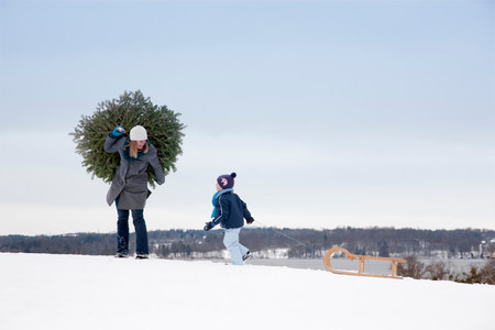 Mother and son carrying christmas tree Standard-Bild