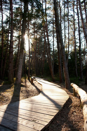 Wooden path in a Bavarian forest