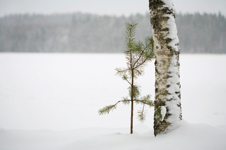 Two trees together in winter landscape Imagens