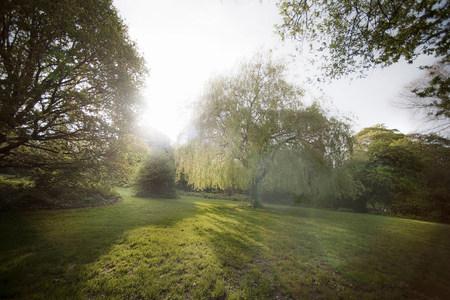 Trees in misty field
