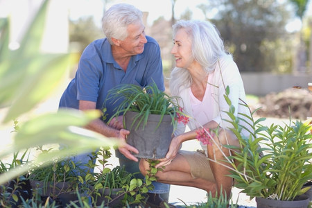 Older couple gardening together