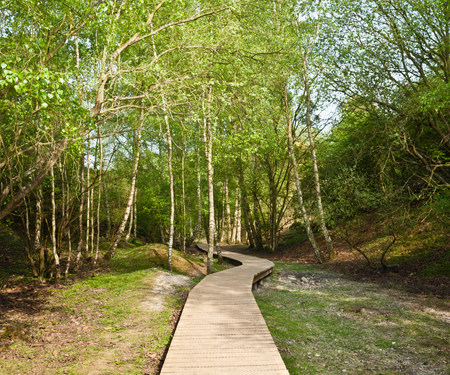 Wooden walkway in forest Фото со стока - 113870478