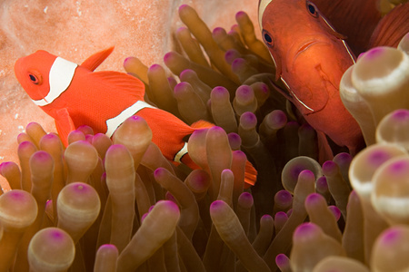 Fish and anemone background. 写真素材