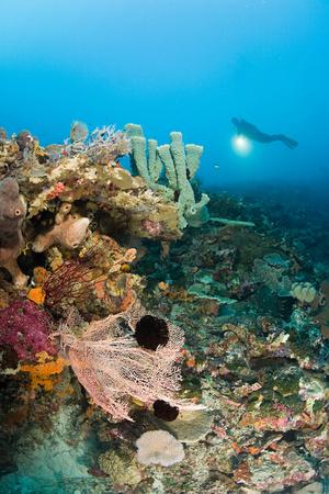 Scuba diver at coral reef