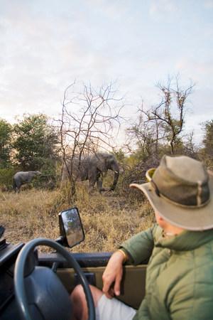Man looking at elephants