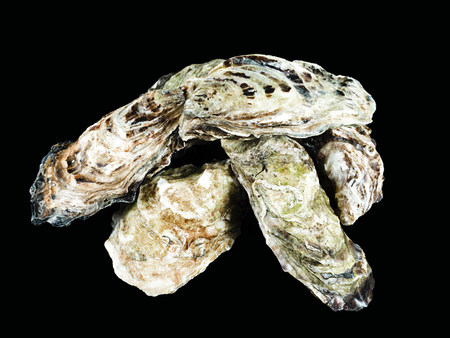 Oysters background.