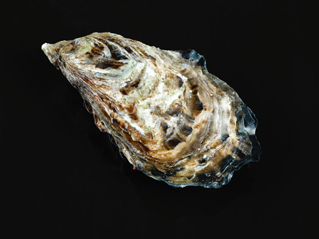 Oyster with black background. Imagens