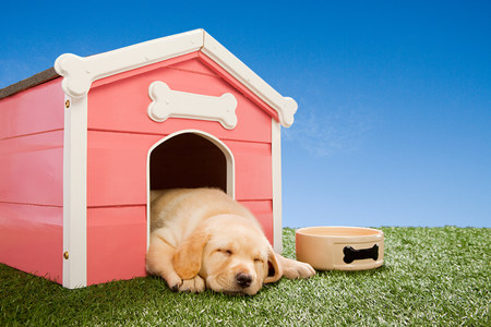 Labrador puppy asleep in kennel