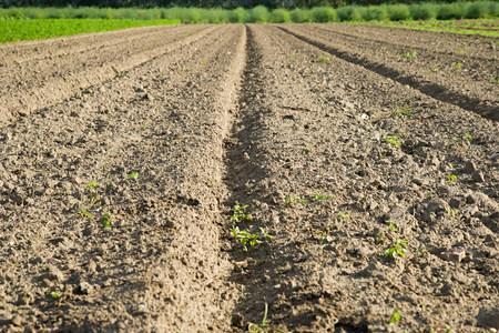 Field, close up of soil Фото со стока