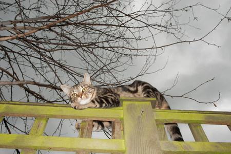 Tabby cat on a fence