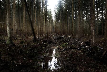 Forest, Northumberland, England, UK