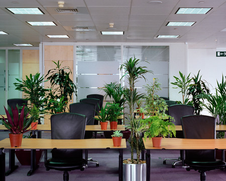 Plants in empty office