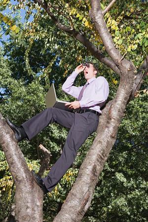 Office worker spying in a tree