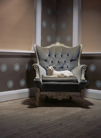 Stuffed cat in an armchair