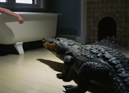 Crocodile in the bathroom