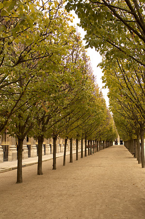 Avenue of trees at palais royal paris