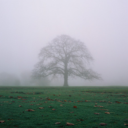 Tree in the mist Stock Photo
