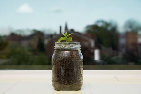Seedling in a jar Stock fotó